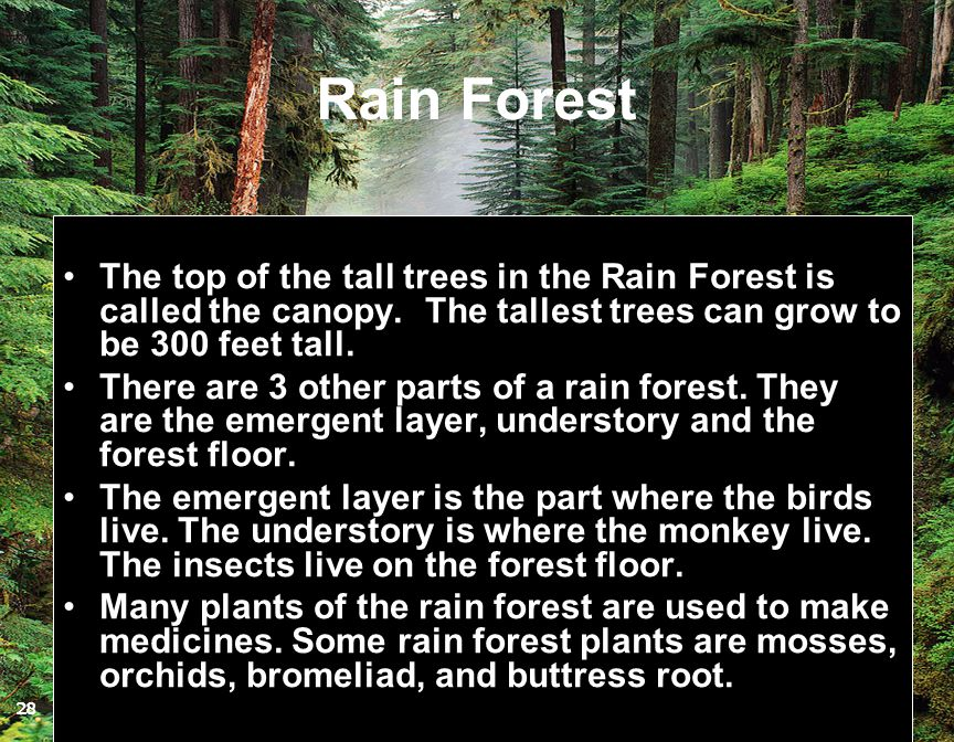 Rain Forest The top of the tall trees in the Rain Forest is called the canopy. The tallest trees can grow to be 300 feet tall. There are 3 other parts