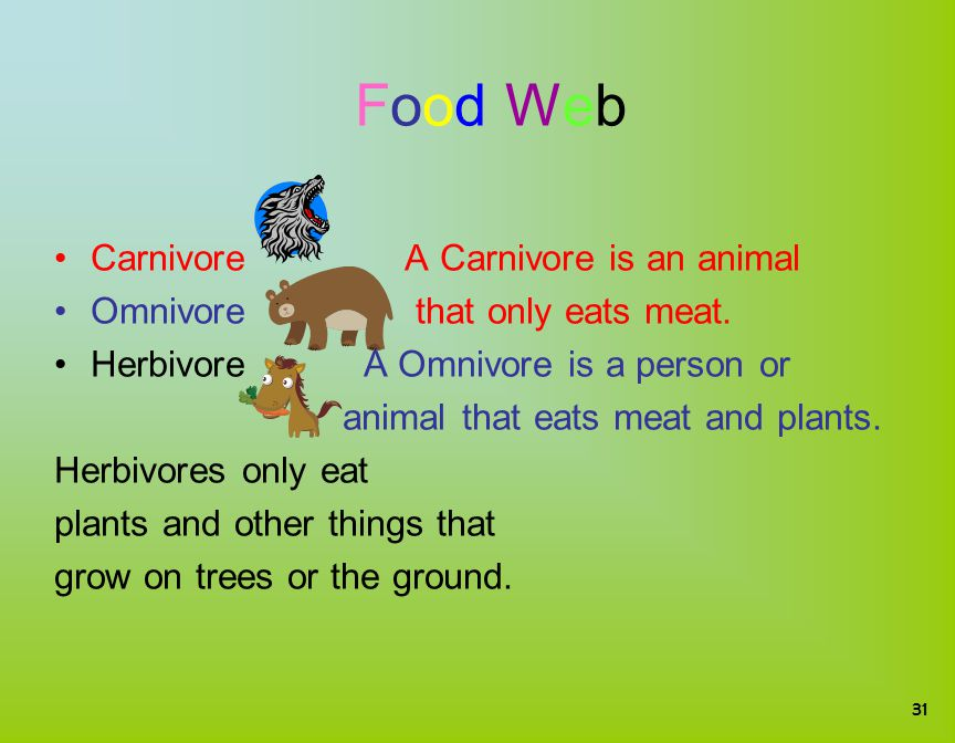 Food WebFood Web Carnivore A Carnivore is an animal Omnivore that only eats meat. Herbivore A Omnivore is a person or animal that eats meat and plants