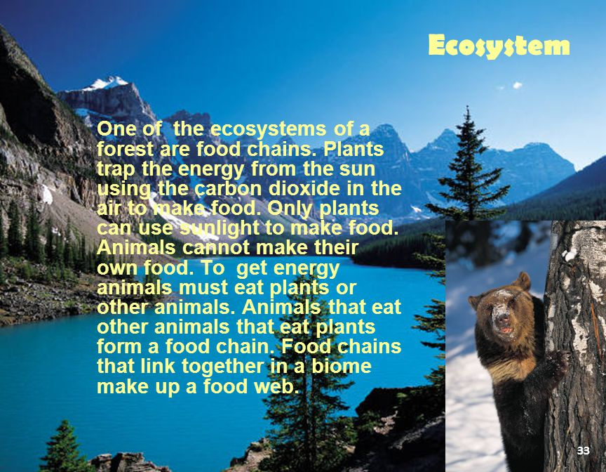 One of the ecosystems of a forest are food chains. Plants trap the energy from the sun using the carbon dioxide in the air to make food. Only plants c