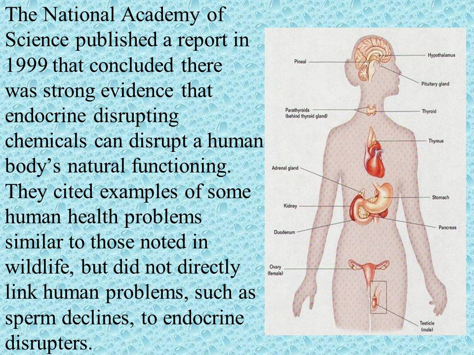 The National Academy of Science published a report in 1999 that concluded there was strong evidence that endocrine disrupting chemicals can disrupt a human body's natural functioning.