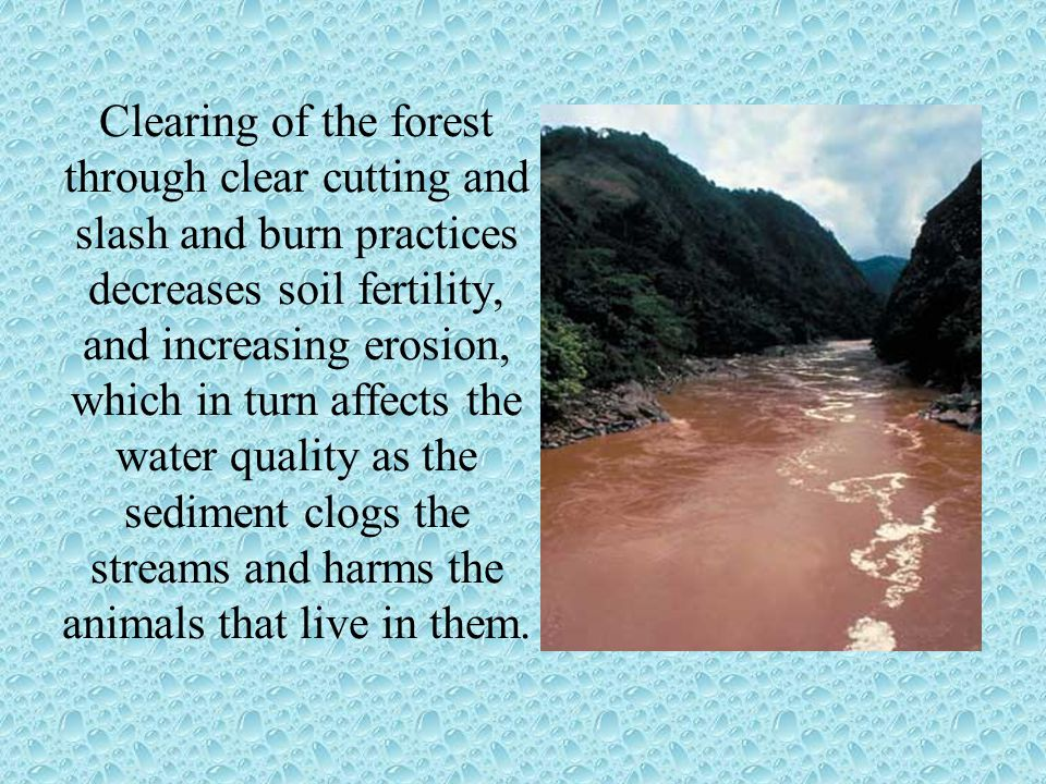Clearing of the forest through clear cutting and slash and burn practices decreases soil fertility, and increasing erosion, which in turn affects the water quality as the sediment clogs the streams and harms the animals that live in them.
