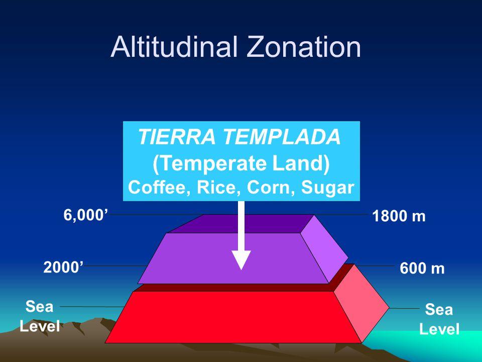 6,000' 1800 m Sea Level 2000' 600 m Sea Level TIERRA TEMPLADA (Temperate Land) Coffee, Rice, Corn, Sugar Altitudinal Zonation