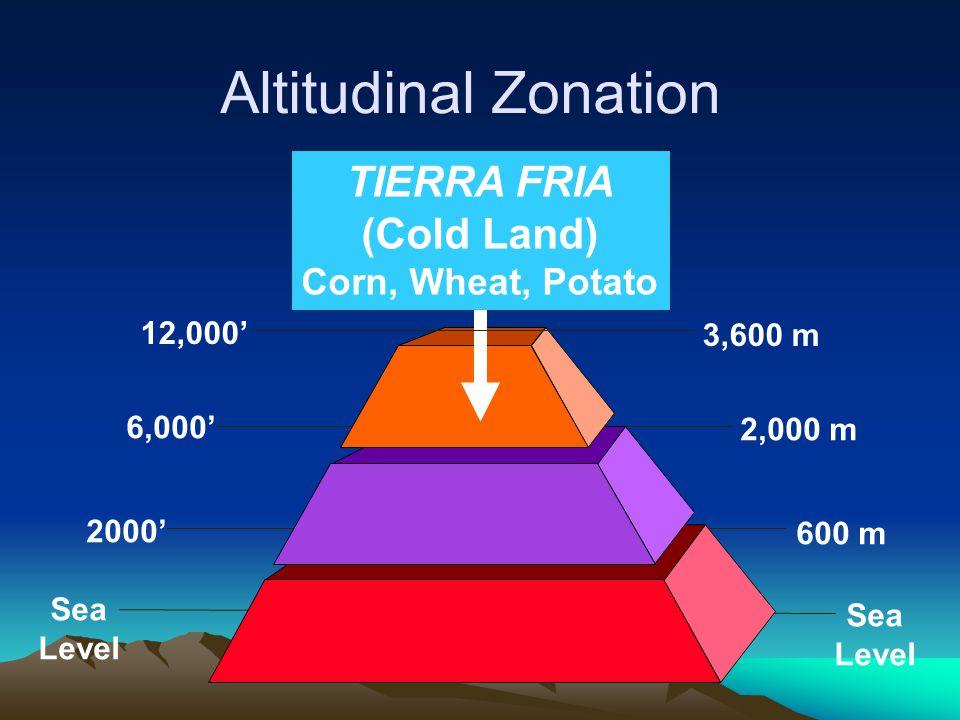 Sea Level 6,000' 2000' 2,000 m 600 m Sea Level 12,000' 3,600 m TIERRA FRIA (Cold Land) Corn, Wheat, Potato Altitudinal Zonation