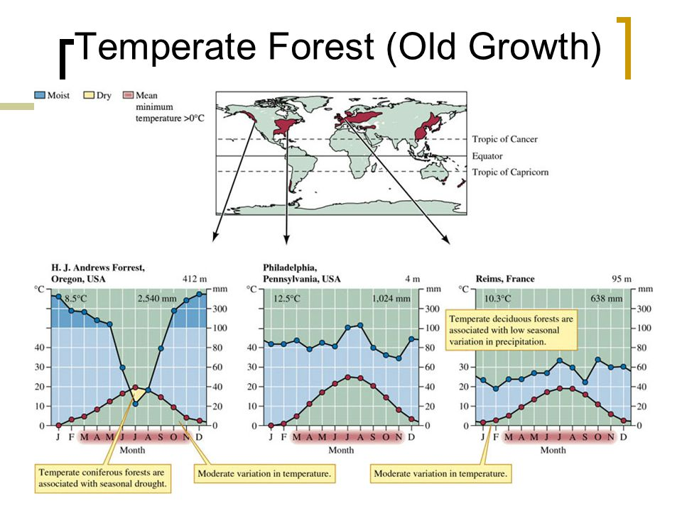 27 Temperate Forest (Old Growth)