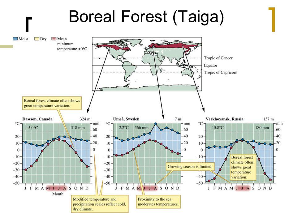29 Boreal Forest (Taiga)