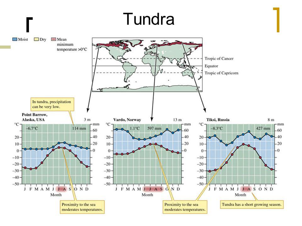 31 Tundra