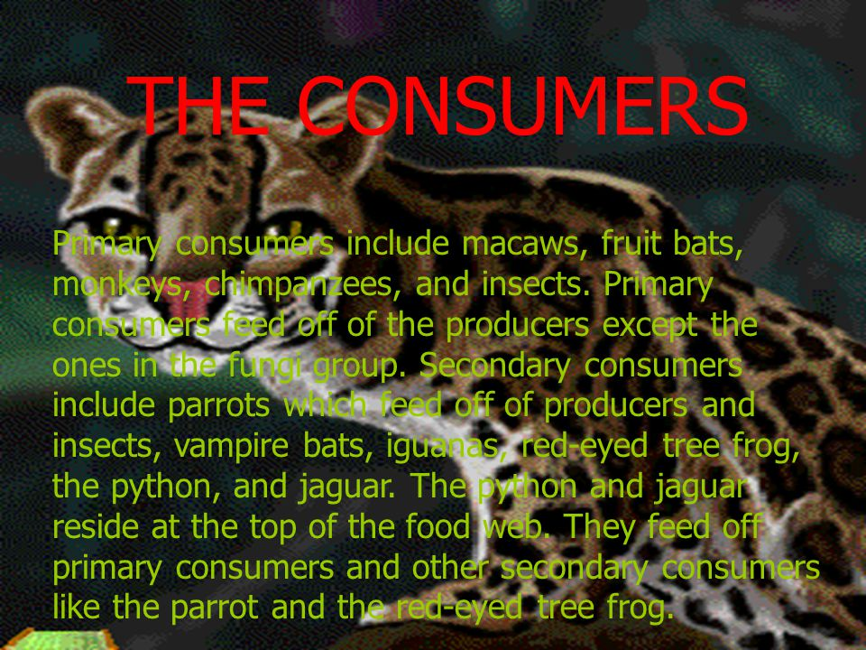 THE CONSUMERS Primary consumers include macaws, fruit bats, monkeys, chimpanzees, and insects. Primary consumers feed off of the producers except the