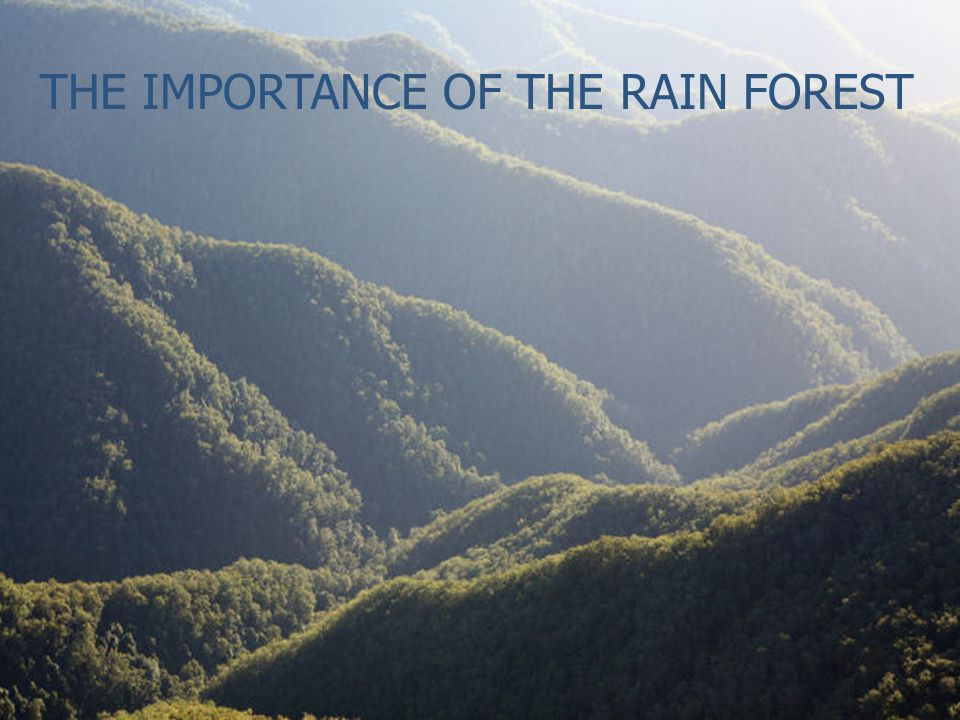THE IMPORTANCE OF THE RAIN FOREST