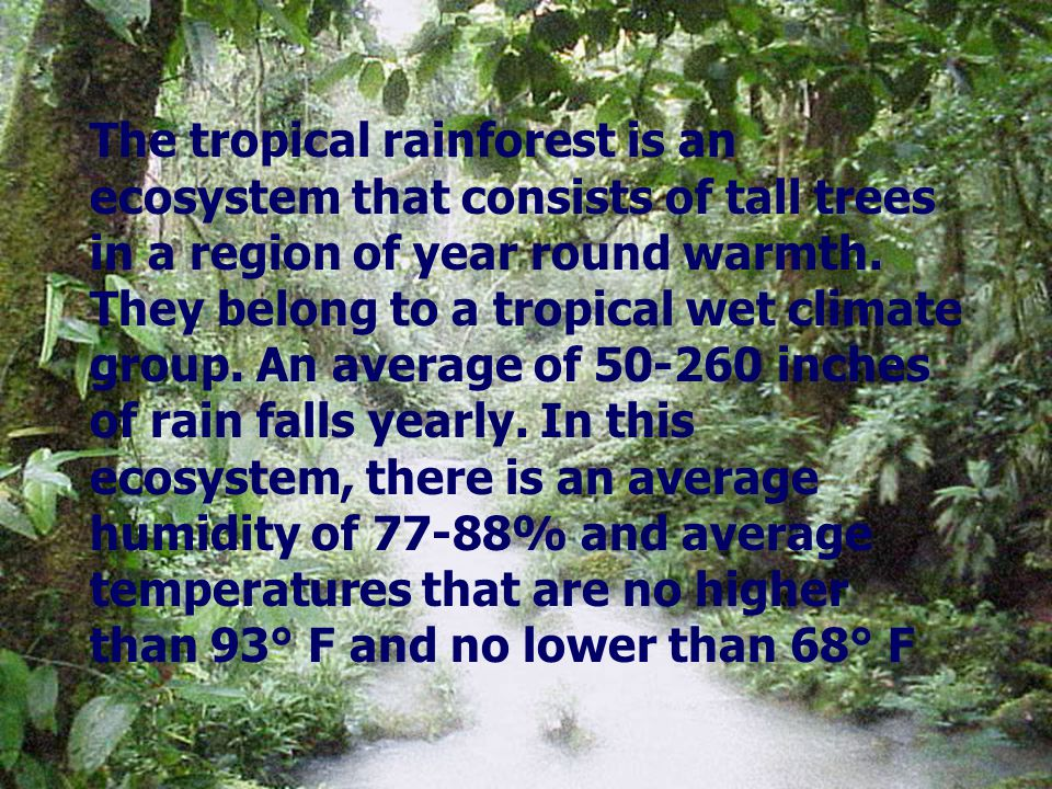 The tropical rainforest is an ecosystem that consists of tall trees in a region of year round warmth. They belong to a tropical wet climate group. An