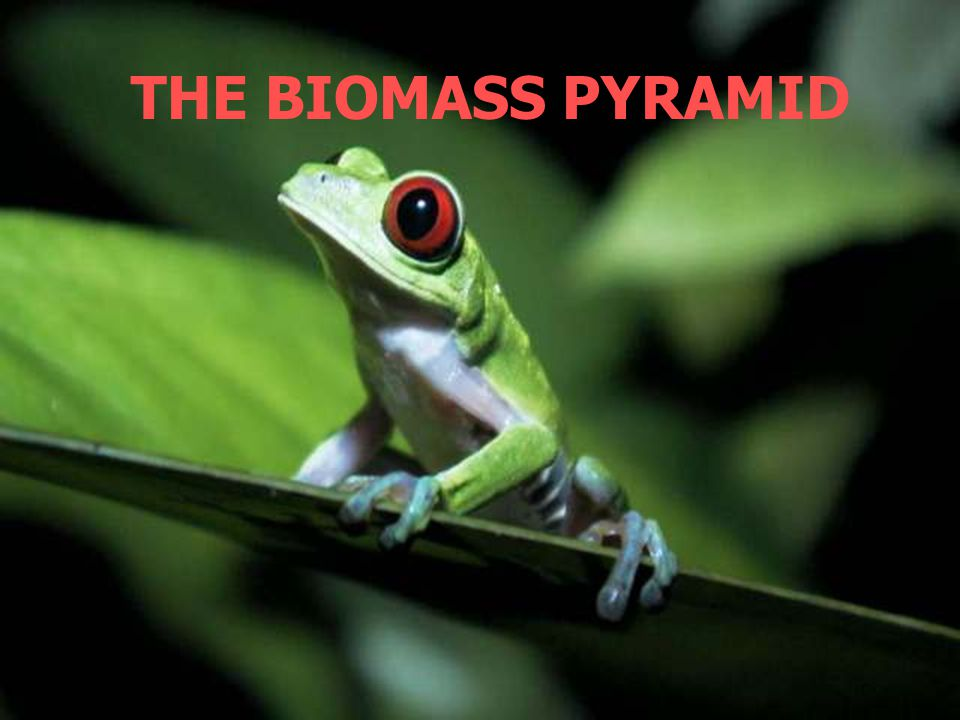 THE BIOMASS PYRAMID