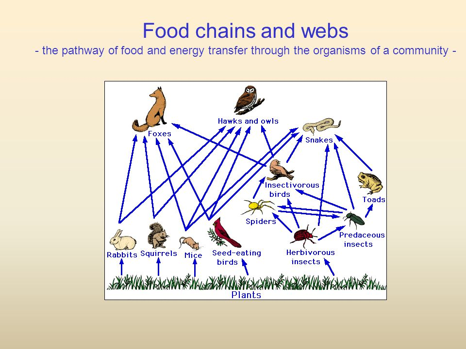 Food chains and webs - the pathway of food and energy transfer through the organisms of a community -
