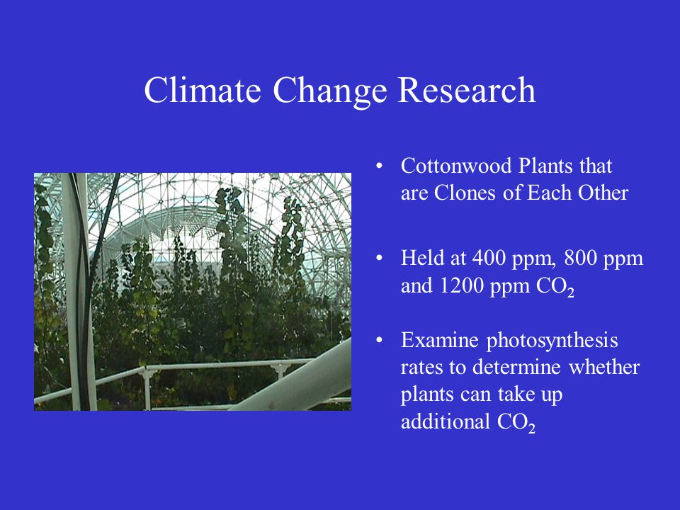 Climate Change Research Cottonwood Plants that are Clones of Each Other Held at 400 ppm, 800 ppm and 1200 ppm CO 2 Examine photosynthesis rates to det