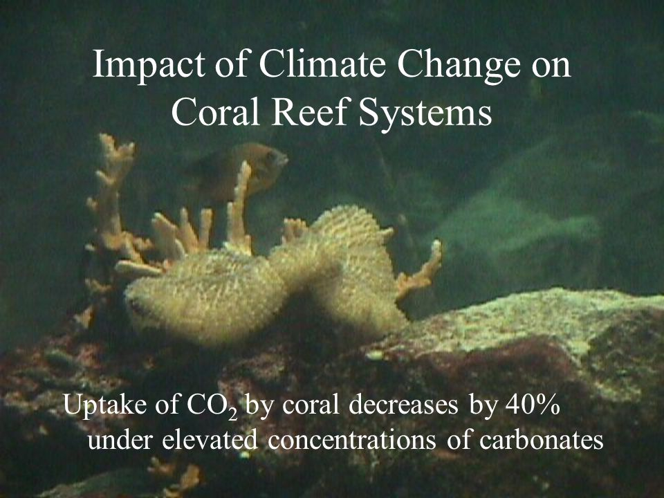 Impact of Climate Change on Coral Reef Systems Uptake of CO 2 by coral decreases by 40% under elevated concentrations of carbonates