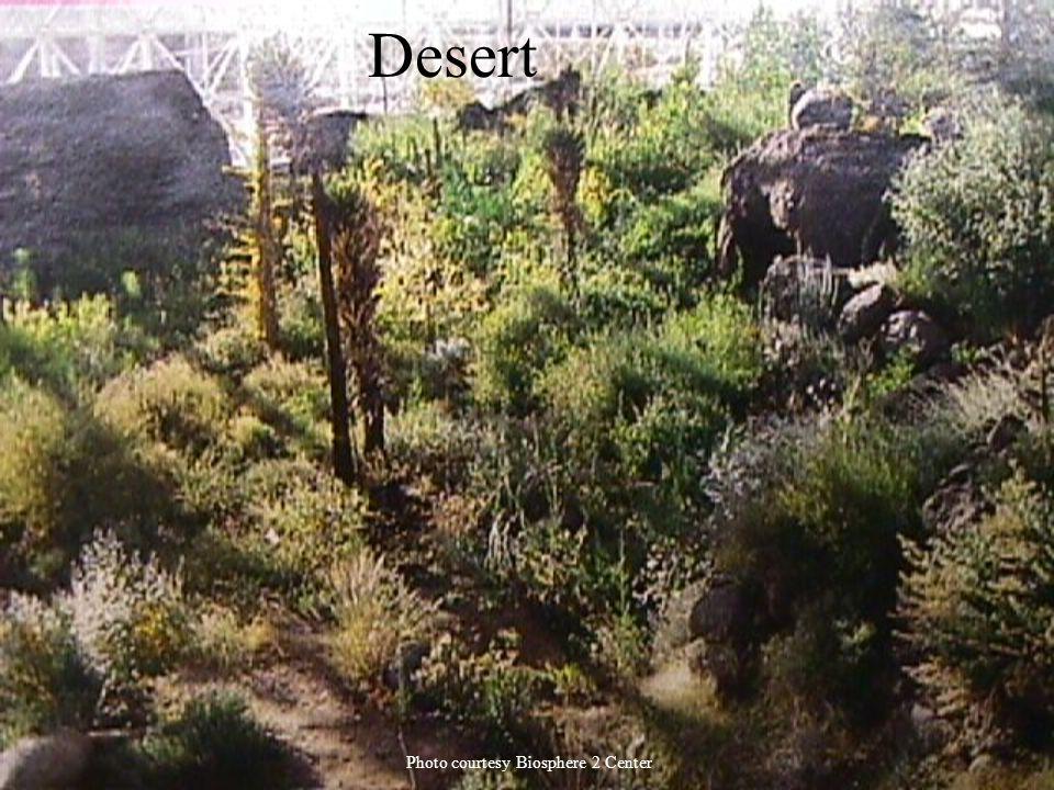 Desert Photo courtesy Biosphere 2 Center