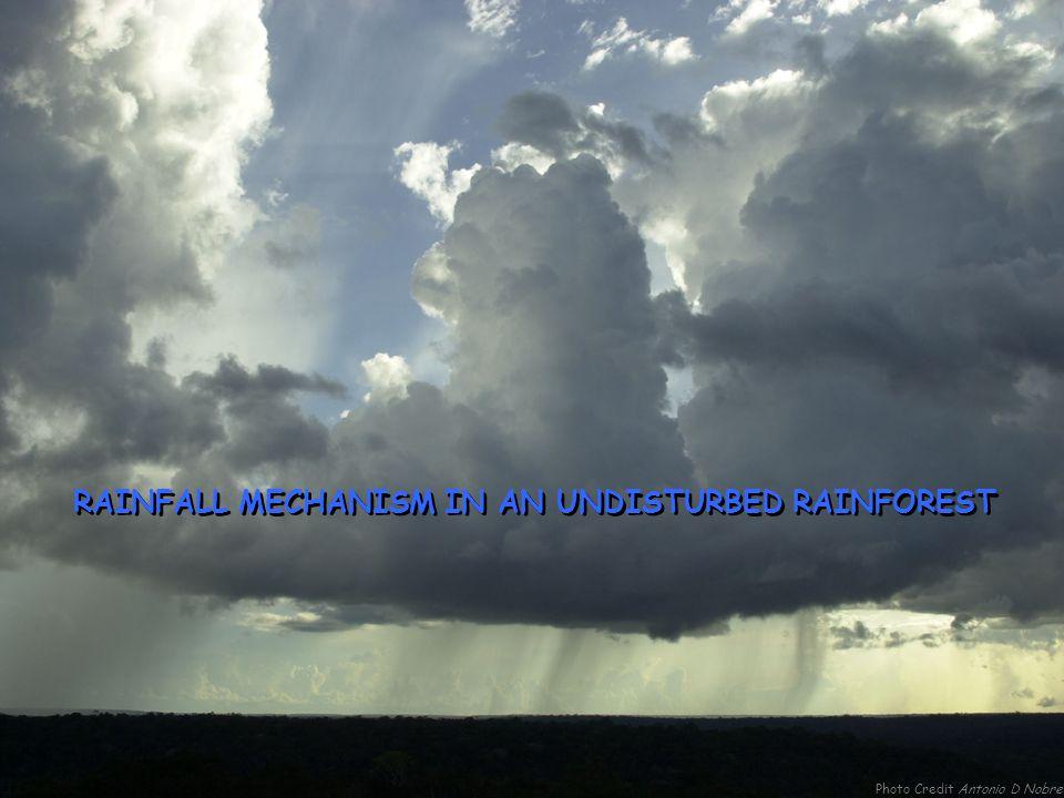RAINFALL MECHANISM IN AN UNDISTURBED RAINFOREST Photo Credit Antonio D Nobre