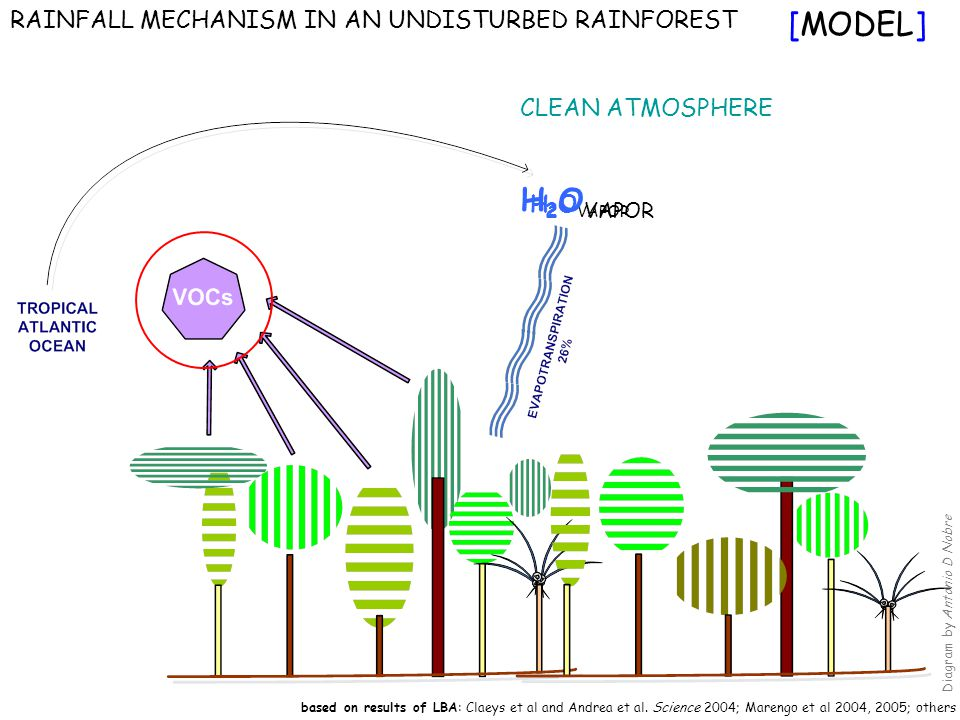 RAINFALL MECHANISM IN AN UNDISTURBED RAINFOREST CLEAN ATMOSPHERE based on results of LBA: Claeys et al and Andrea et al.