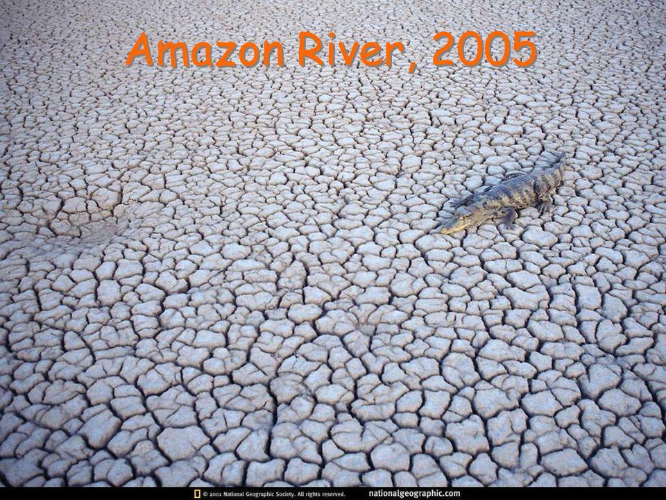 Amazon River, 2005