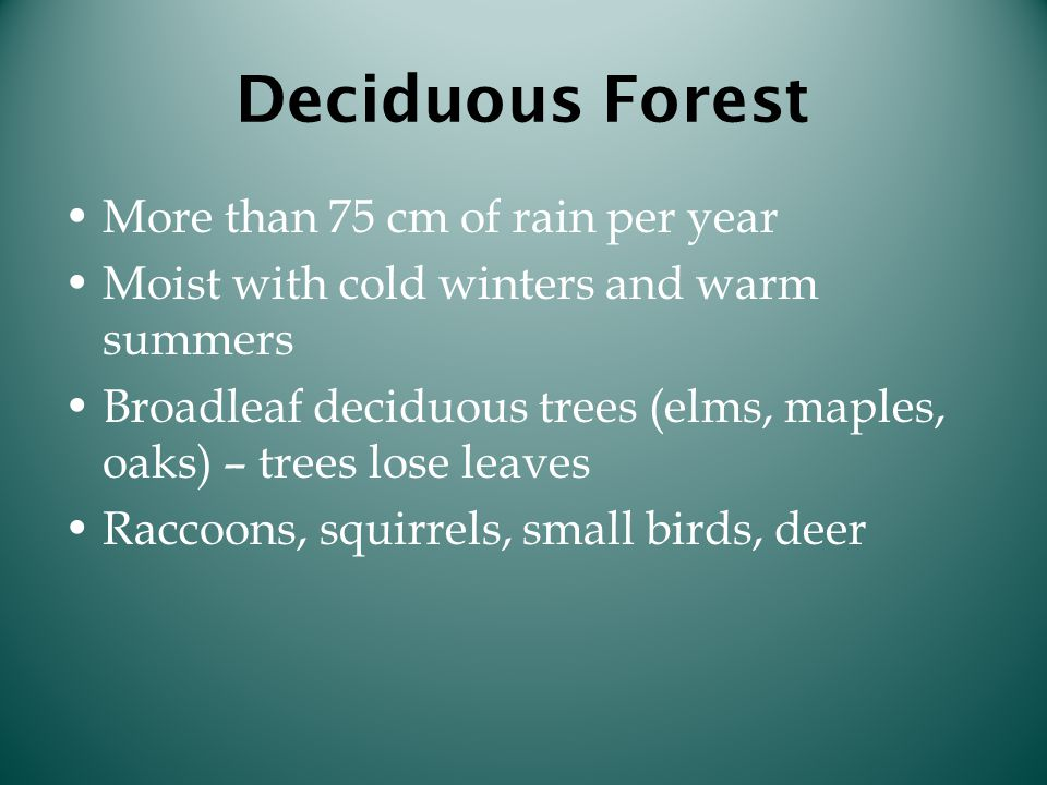 Deciduous Forest More than 75 cm of rain per year Moist with cold winters and warm summers Broadleaf deciduous trees (elms, maples, oaks) – trees lose