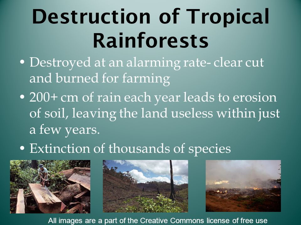 Destruction of Tropical Rainforests Destroyed at an alarming rate- clear cut and burned for farming 200+ cm of rain each year leads to erosion of soil