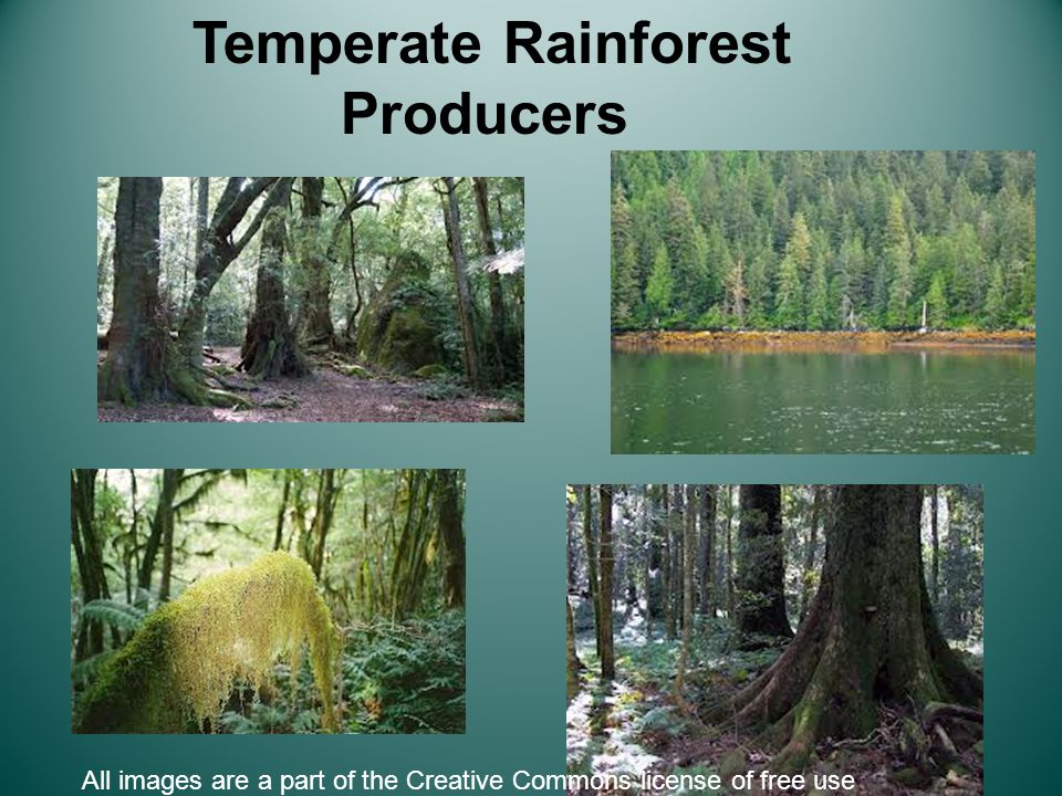 Temperate Rainforest Producers All images are a part of the Creative Commons license of free use
