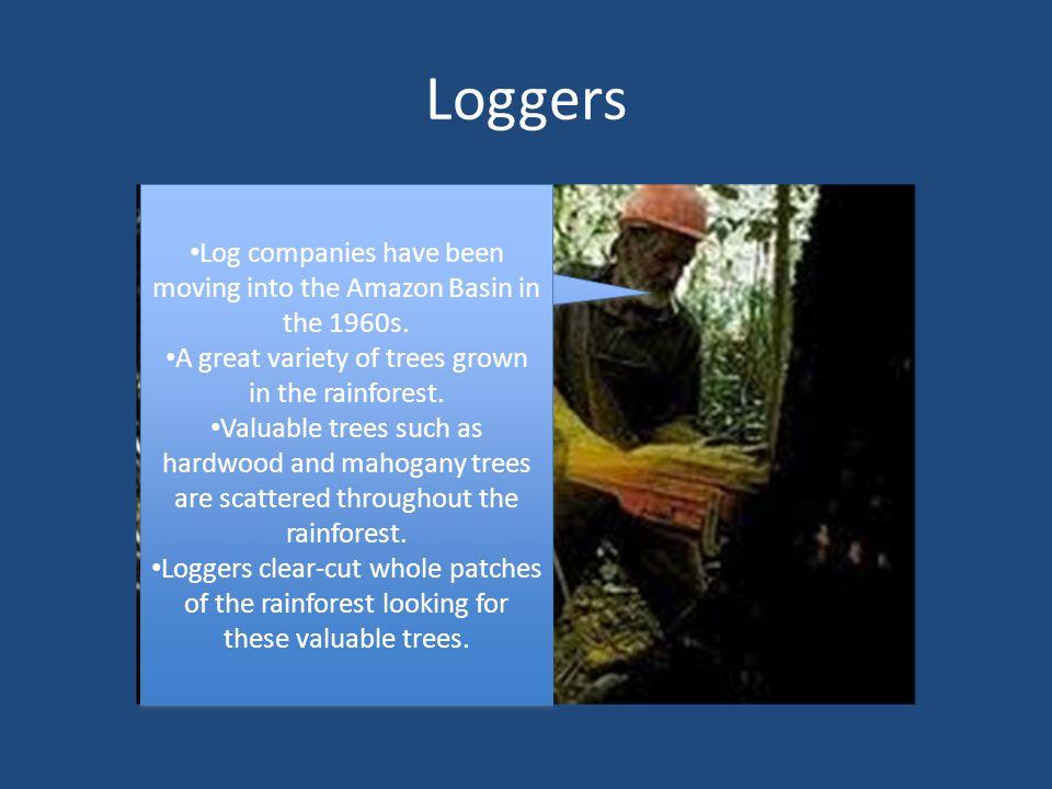 Loggers We are helping Brazil's economy grow. We create jobs.