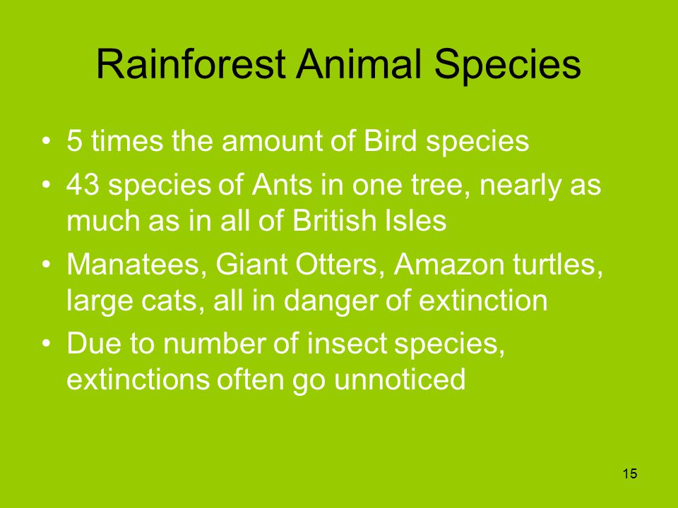 Rainforest Animal Species 5 times the amount of Bird species 43 species of Ants in one tree, nearly as much as in all of British Isles Manatees, Giant Otters, Amazon turtles, large cats, all in danger of extinction Due to number of insect species, extinctions often go unnoticed 15