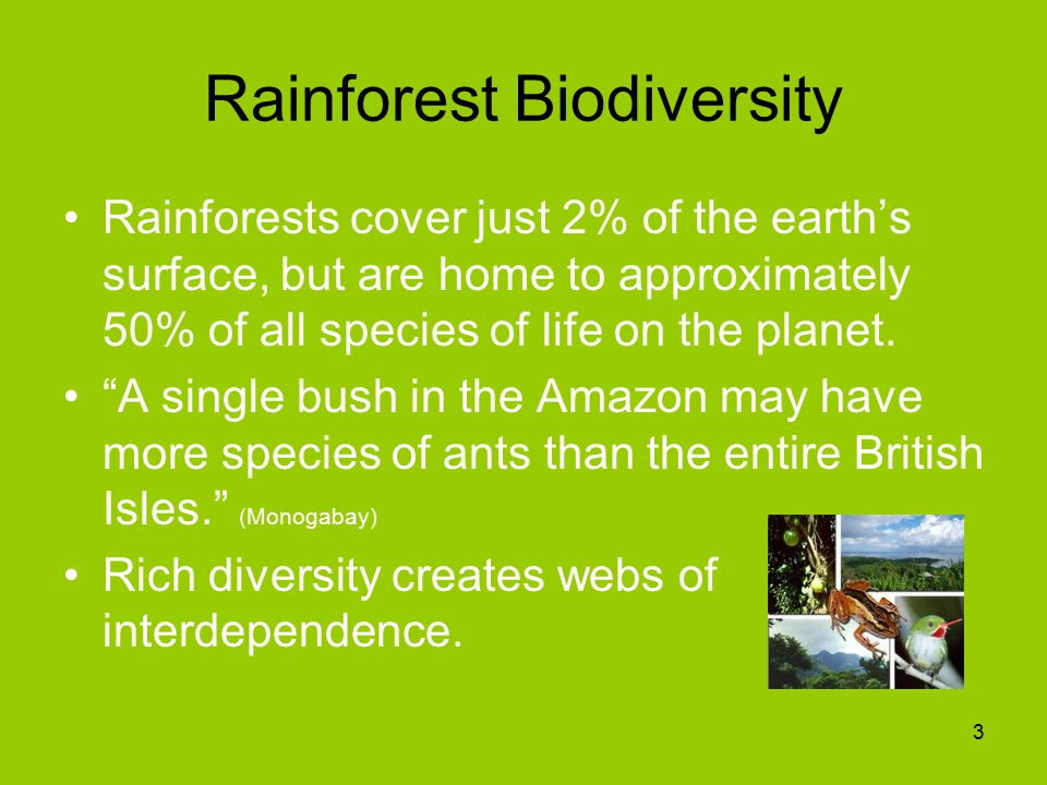 Rainforest Biodiversity Rainforests cover just 2% of the earth's surface, but are home to approximately 50% of all species of life on the planet.