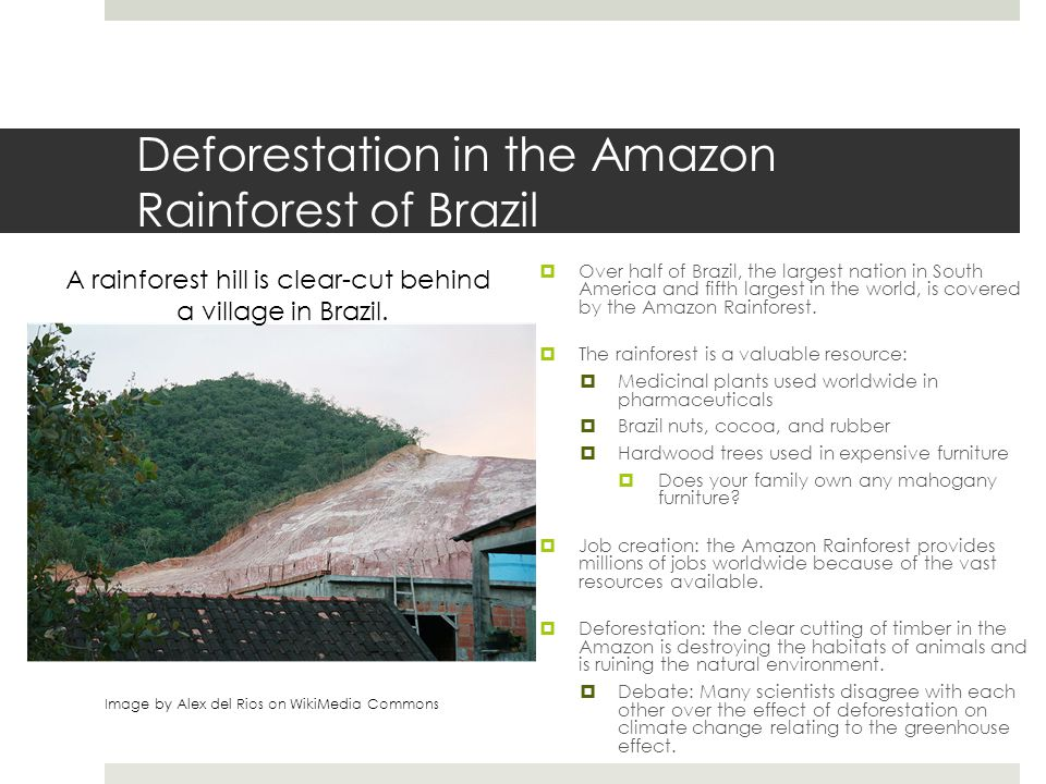 Deforestation in the Amazon Rainforest of Brazil  Government actions:  The government of Brazil has become increasingly proactive in the limitation of clear cutting.