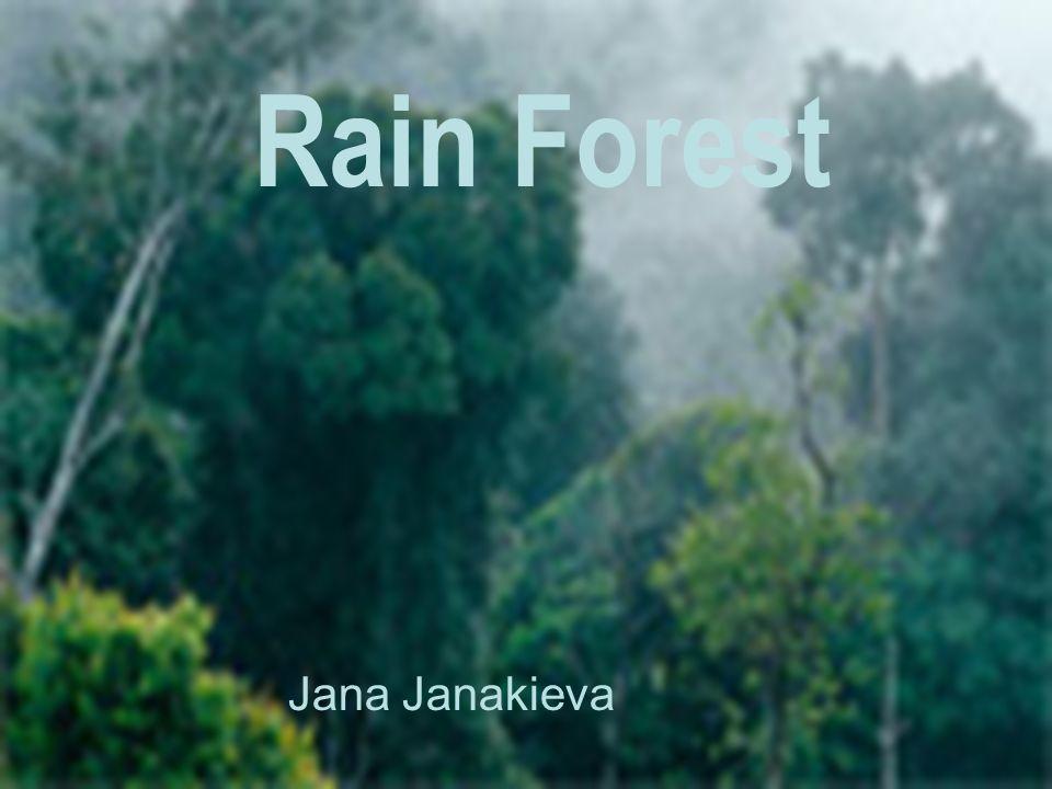 Rain Forest Jana Janakieva