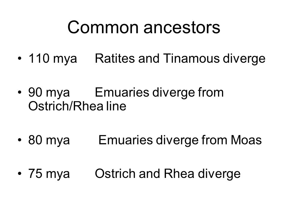 Common ancestors 110 mya Ratites and Tinamous diverge 90 mya Emuaries diverge from Ostrich/Rhea line 80 mya Emuaries diverge from Moas 75 mya Ostrich and Rhea diverge