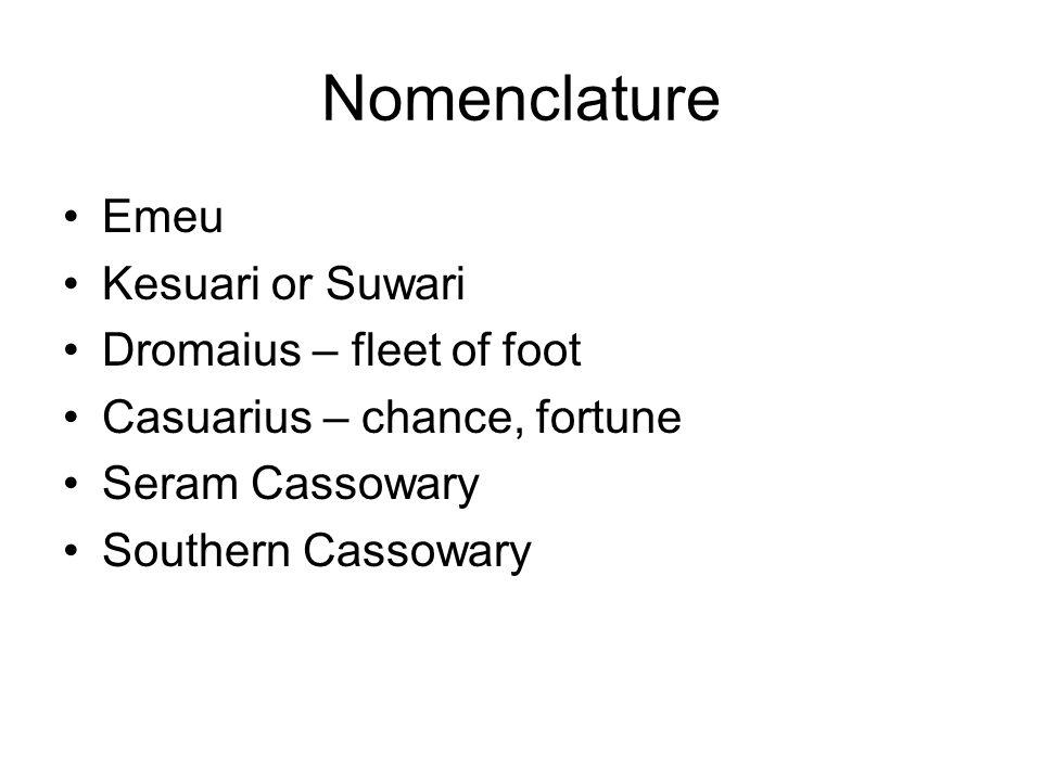 Nomenclature Emeu Kesuari or Suwari Dromaius – fleet of foot Casuarius – chance, fortune Seram Cassowary Southern Cassowary