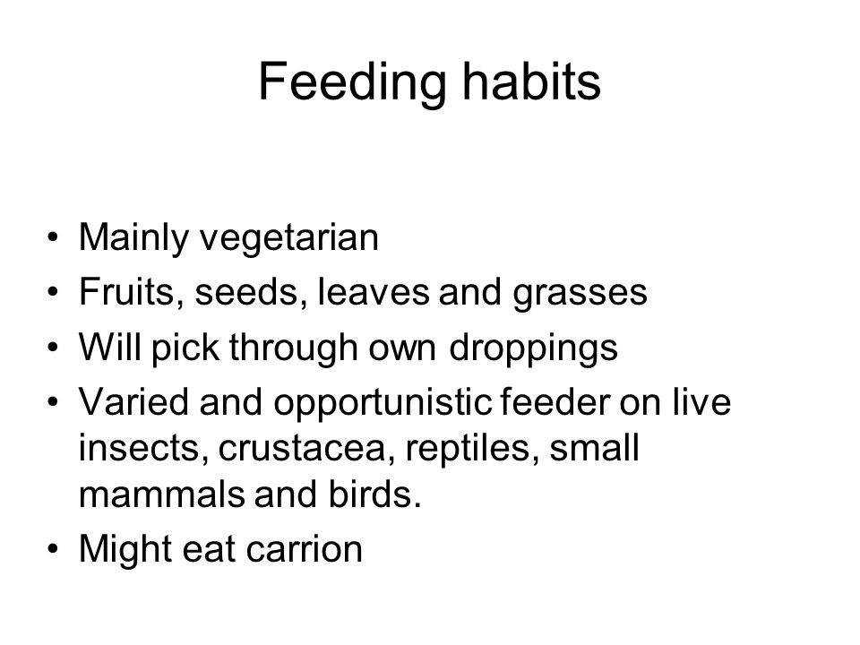 Feeding habits Mainly vegetarian Fruits, seeds, leaves and grasses Will pick through own droppings Varied and opportunistic feeder on live insects, crustacea, reptiles, small mammals and birds.