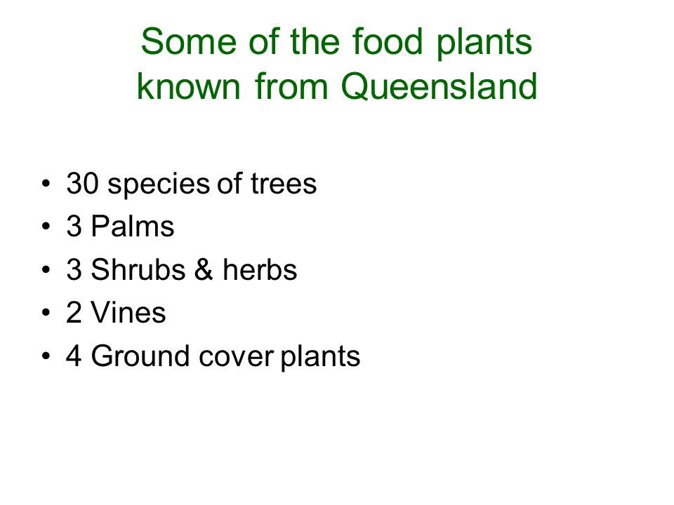 Some of the food plants known from Queensland 30 species of trees 3 Palms 3 Shrubs & herbs 2 Vines 4 Ground cover plants