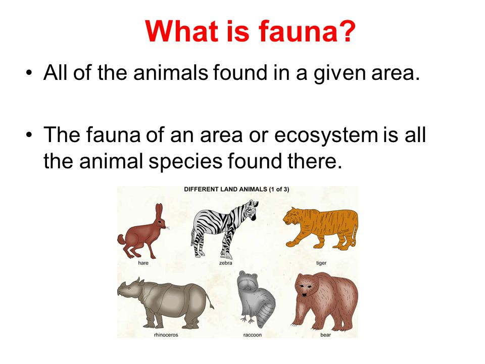 What is fauna.All of the animals found in a given area.