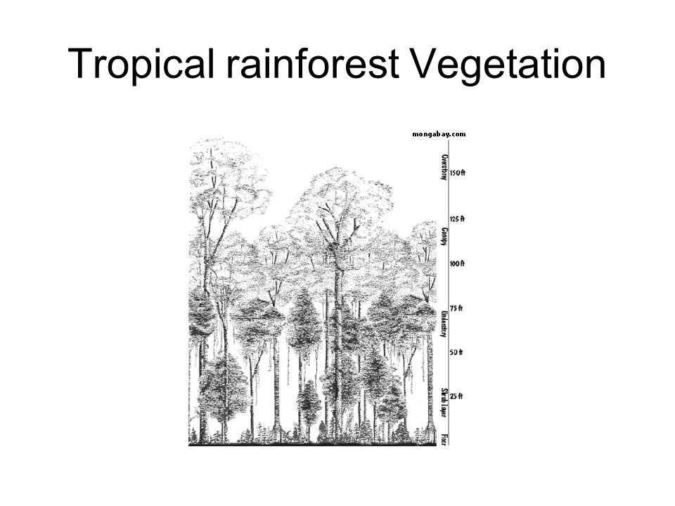 1Forest floor- little light reaches the ground so there is little plant growth except near rivers and in clearings.