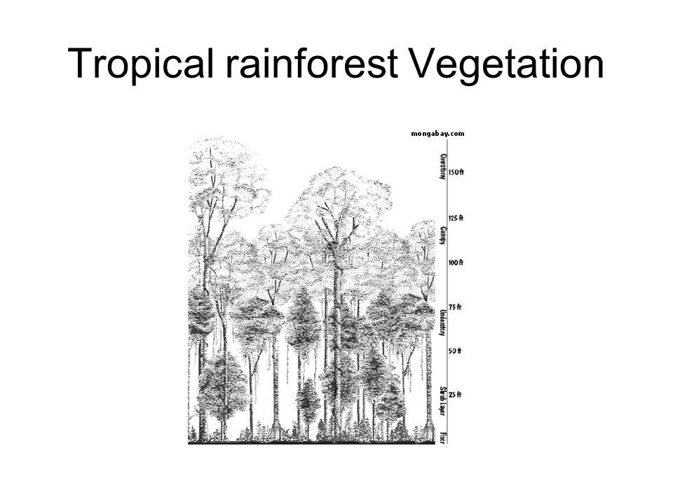 Tropical rainforest Vegetation