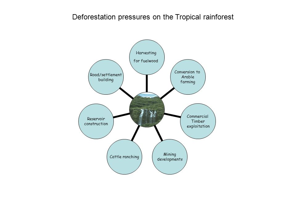 Problems with shifting Cultivation The reduction in the area of tropical rainforest available has greatly increased pressure on the remaining area of rainforest.