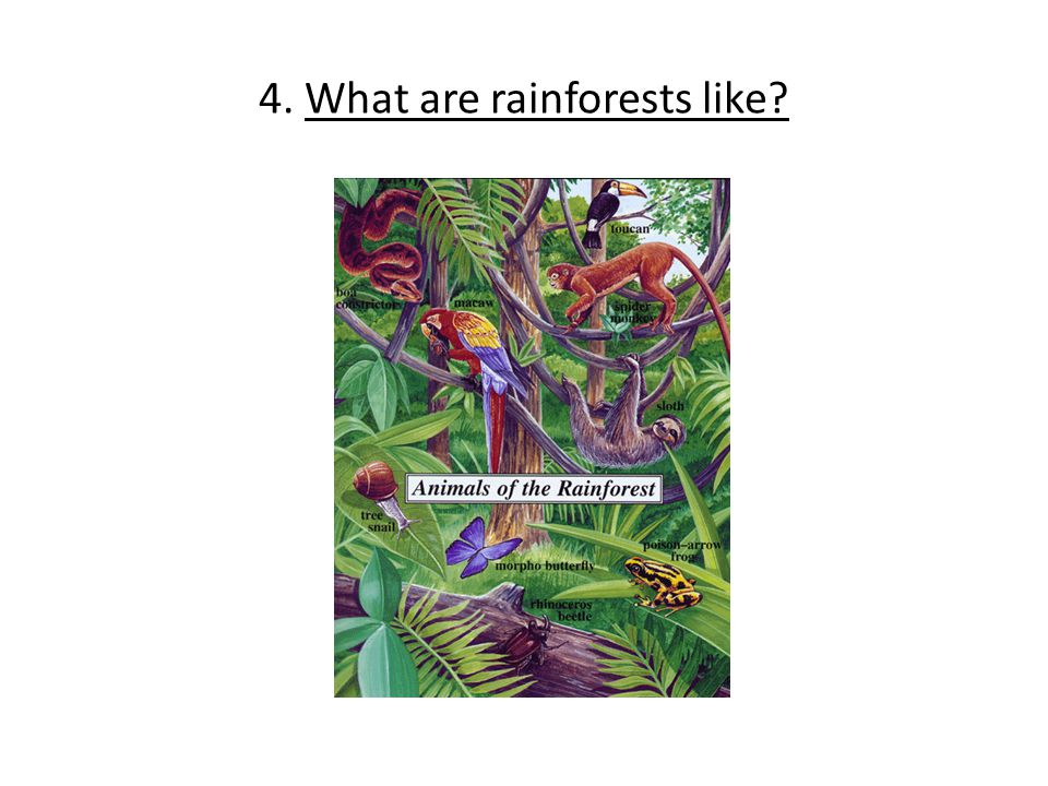 4. What are rainforests like