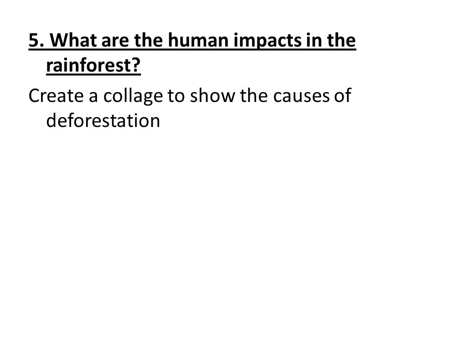 5. What are the human impacts in the rainforest.