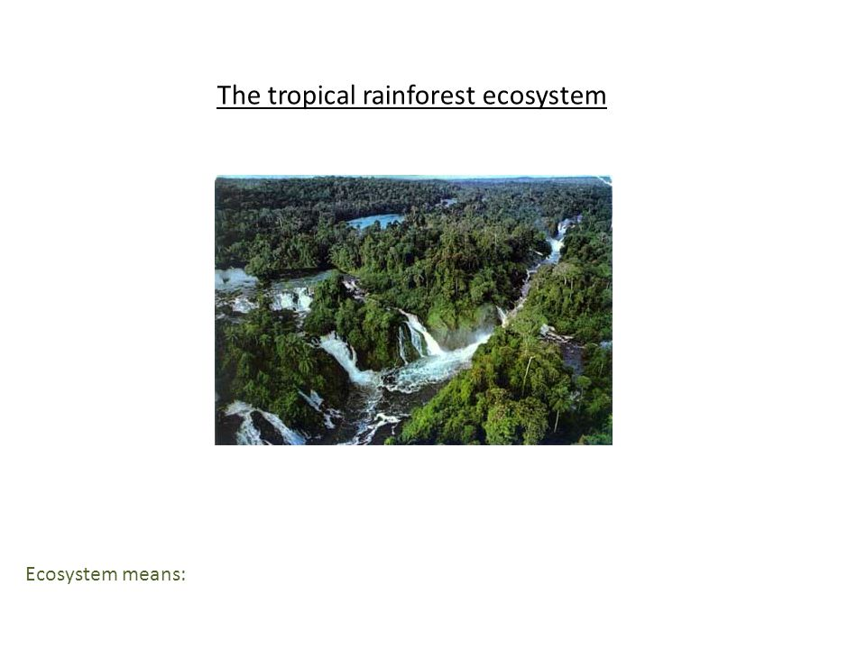 The tropical rainforest ecosystem Ecosystem means: