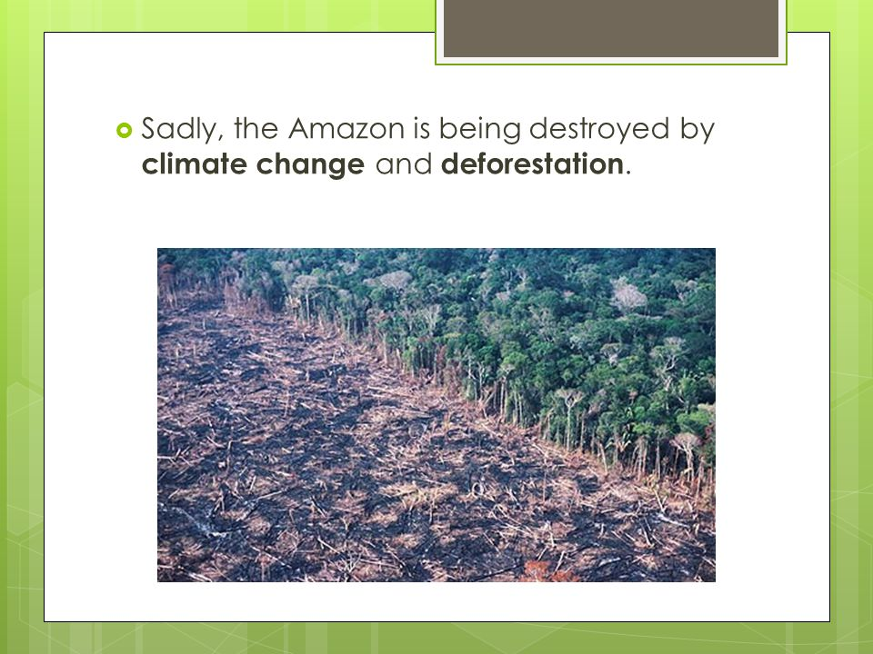 Sadly, the Amazon is being destroyed by climate change and deforestation.