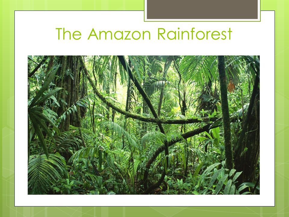 Questions to think about:  What are the characteristics of a rainforest.