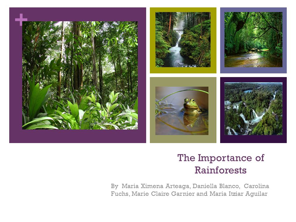+ The Importance of Rainforests By Maria Ximena Arteaga, Daniella Blanco, Carolina Fuchs, Marie Claire Garnier and Maria Itziar Aguilar