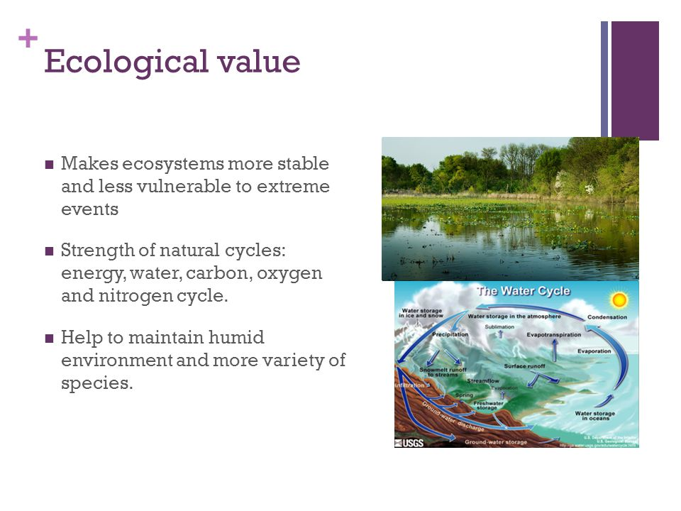 + Ecological value Makes ecosystems more stable and less vulnerable to extreme events Strength of natural cycles: energy, water, carbon, oxygen and nitrogen cycle.