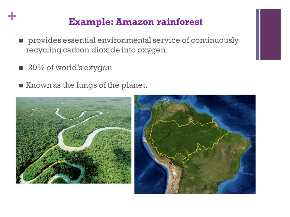 + Example: Amazon rainforest provides essential environmental service of continuously recycling carbon dioxide into oxygen.