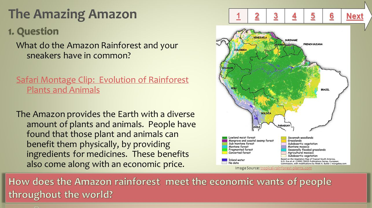 What do the Amazon Rainforest and your sneakers have in common.
