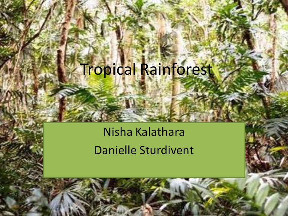 Tropical Rainforest Nisha Kalathara Danielle Sturdivent