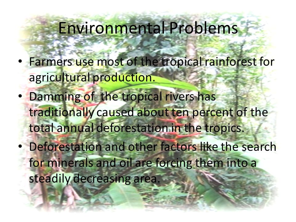 Environmental Problems Farmers use most of the tropical rainforest for agricultural production.