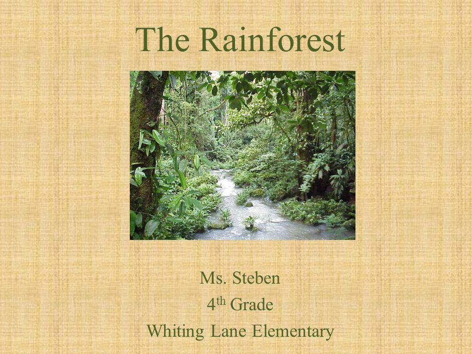 The Rainforest Ms. Steben 4 th Grade Whiting Lane Elementary