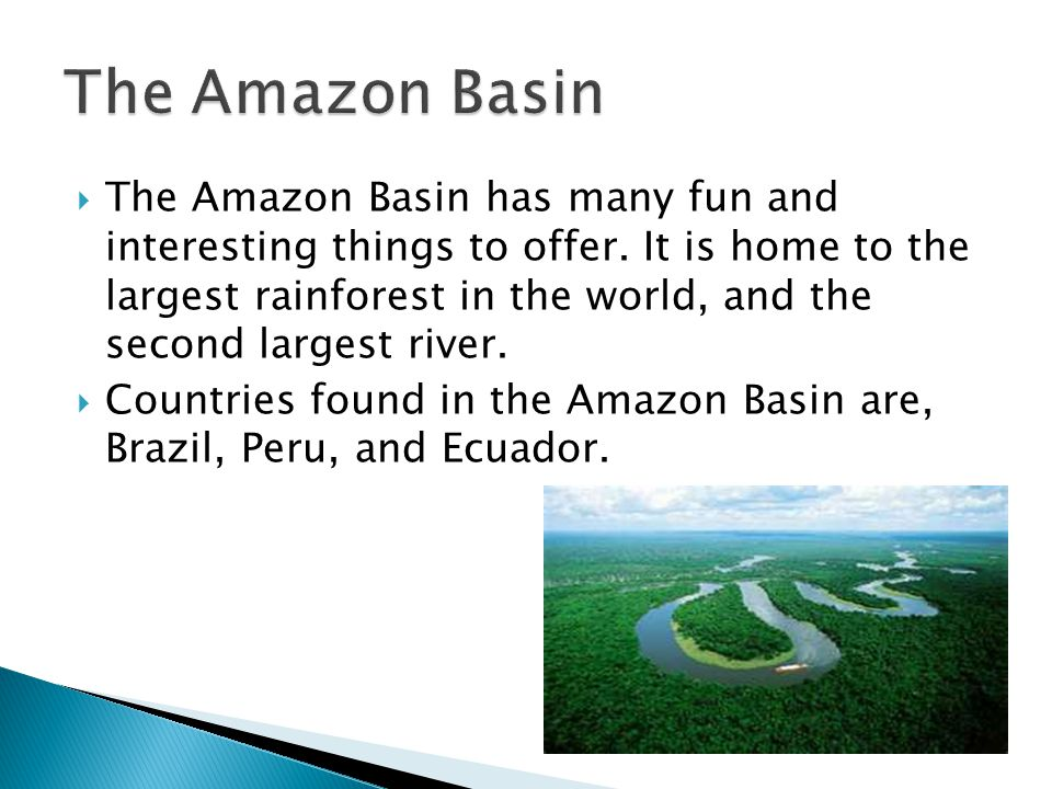 The Amazon Rainforest is thought to be formed during the Eocene era, which occurred about 56 million years ago.